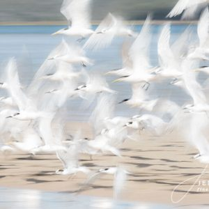 Fine Art Birds in flight