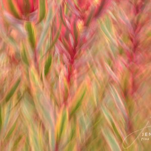 Creative pink flowers Fine Art