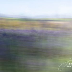 Fine Art Photography Lavender Fields