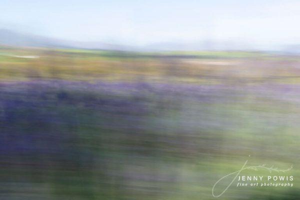 Fine Art Photography Lavender Fields